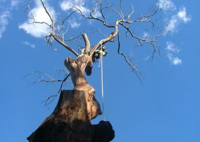 Large dead tree removal in Gosford