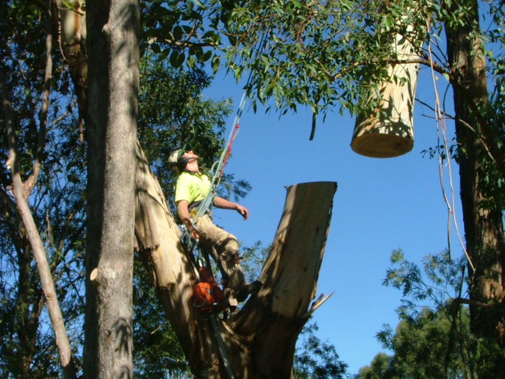 Large crane job in Wyong