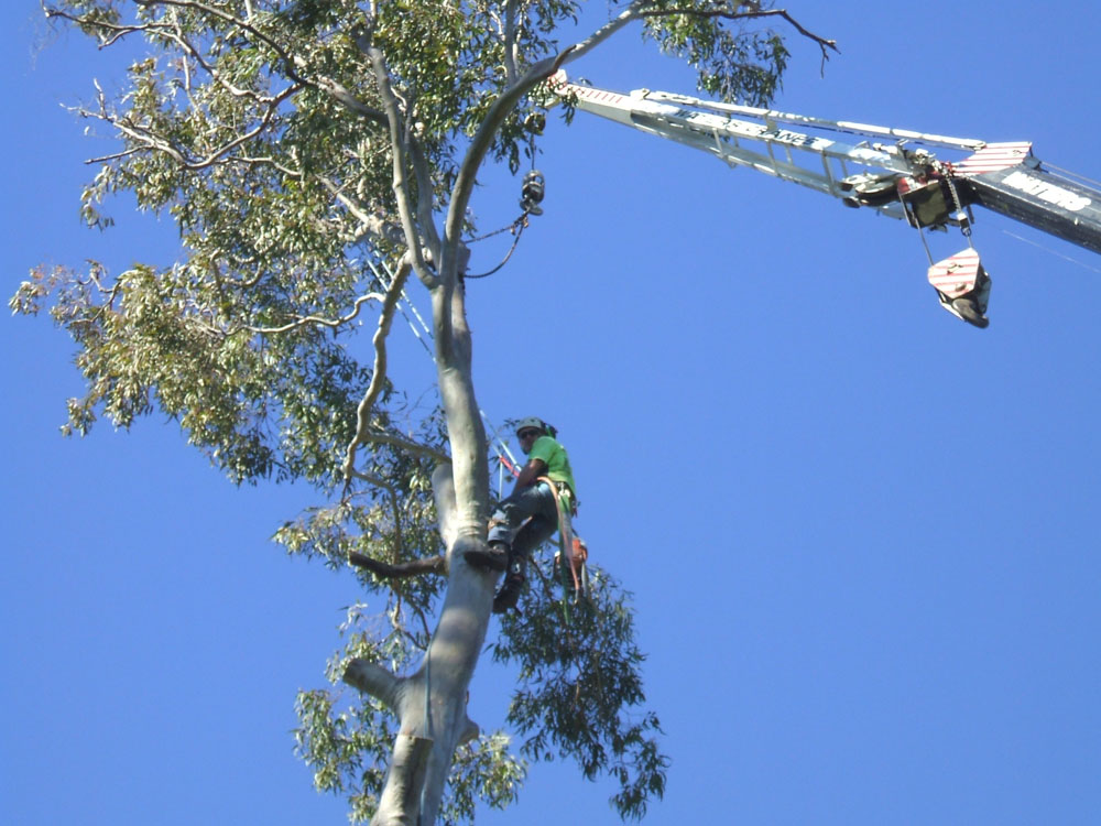 Using crane for easy access to tree