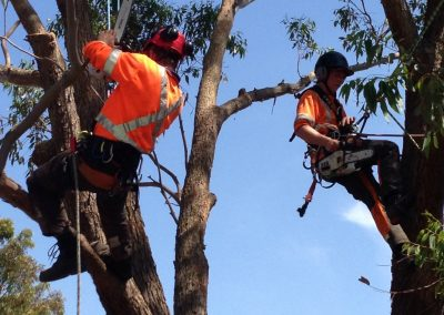 Tree Removal Central Coast | Arborist & Tree Services Central Coast NSW