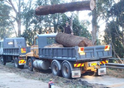 Large logs of to the mill